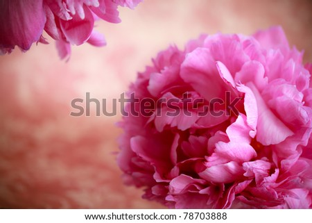 Pink peony flowers in retro vintage style - stock photo