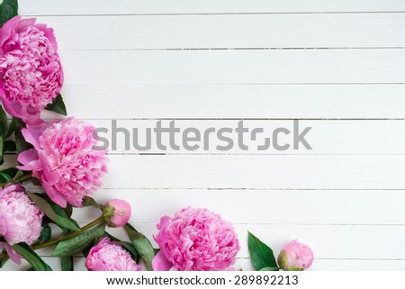 Pink peony flowers on white vintage wooden background. Copy space. Wedding, gift card, valentine's day or mothers day background  - stock photo