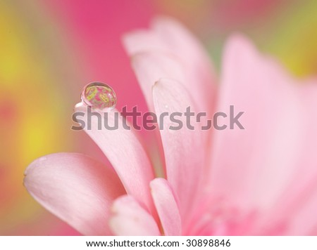 pink petals with water drop - stock photo