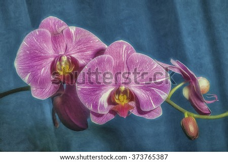 Pink phalaenopsis orchids,digital oil painting - stock photo