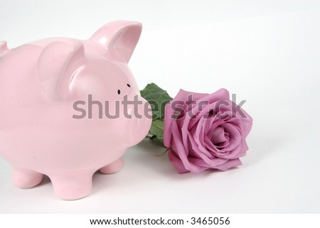 Pink Piggy Bank and Pink Rose on isoalted on white background - stock photo