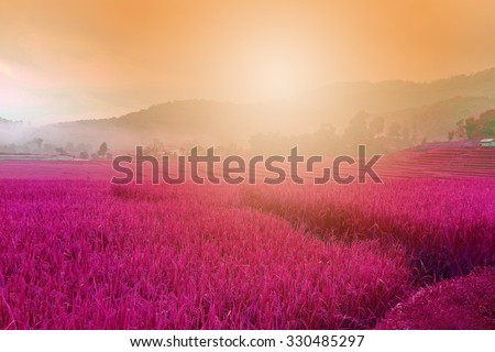 pink purple field , imagination ,lavender flowers in the gentle pink light of morning background. - stock photo