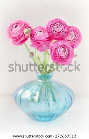 Pink ranunculus flowers close-up in a glass vase . - stock photo