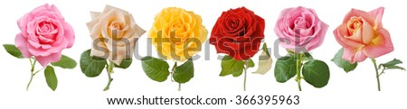Pink, red, cream, tea, orange and yellow rose set isolated on white background   - stock photo