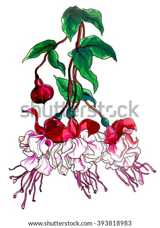 Pink red fuchsia flower in blossom. Hand drawn decorative watercolor tropical flowers isolated on white background. Botanical illustration for wedding printing products, cards, invitation. - stock photo