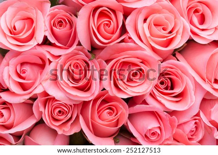pink rose flower bouquet background - stock photo