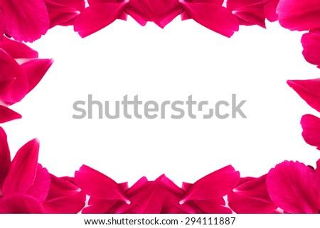 pink rose frame - stock photo