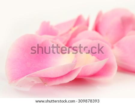 pink rose petals - stock photo