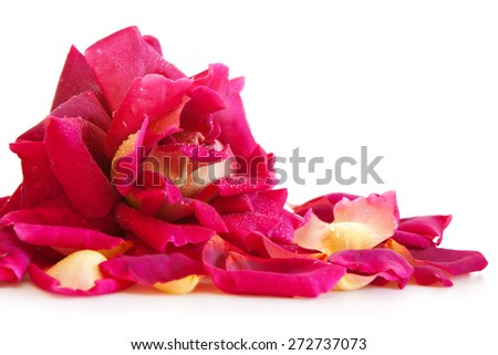 Pink rose petals and isolated on white background. - stock photo