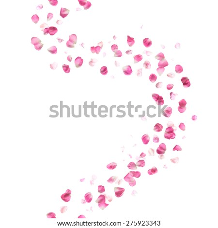 pink rose petals breeze, studio photographed, with different color intensity, vertically repeating and isolated on absolute white - stock photo