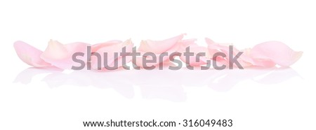 pink rose petals, isolated on white background - stock photo