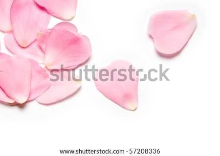 Pink rose petals on white background - stock photo