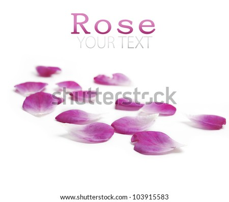 Pink rose petals over white background - stock photo