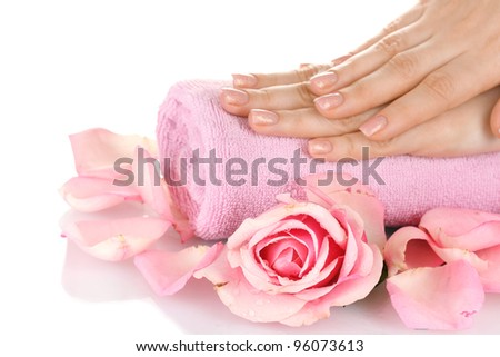 Pink rose with hands on white background - stock photo