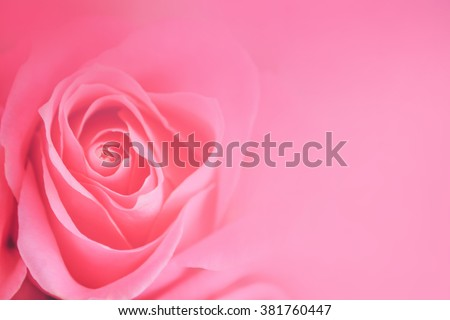 Pink roses in soft color, Made with blur style for background - stock photo