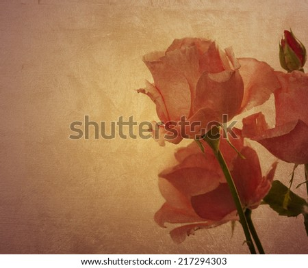 pink Roses over textured background - stock photo