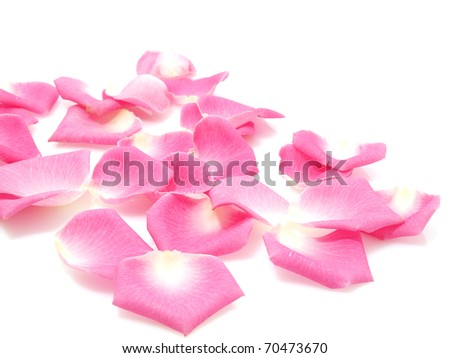Pink roses petals - stock photo