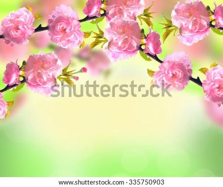 Pink sakura blossom over blurred spring nature background - stock photo
