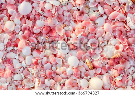 Pink sand beach on Barbuda island in Caribbean made of tiny pink shells, close up photo - stock photo