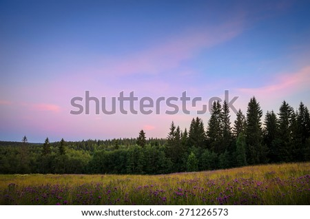 pink sky over the field with pink flowers - stock photo