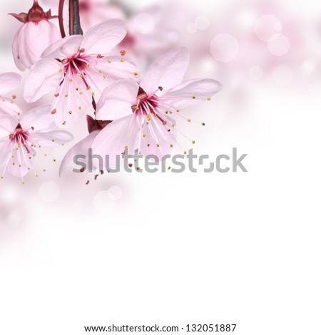 Pink spring blossom border - stock photo