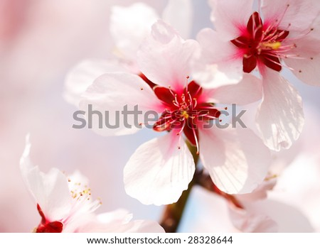 pink tree flower - stock photo