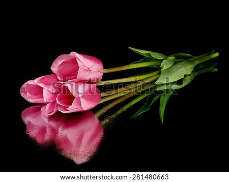 Pink tulip on a black background with reflection - stock photo