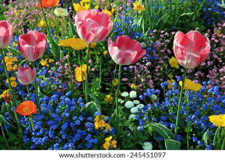pink tulips and multicolored garden flowers with sunlight, horizontal image, selective focus  - stock photo