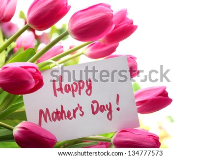 Pink tulips for mother's day - stock photo