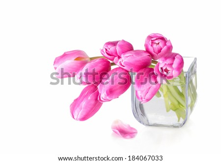 Pink tulips in glass vase on white background. - stock photo
