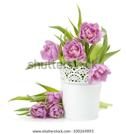Pink tulips in metal flowerpot. Isolated on white background - stock photo
