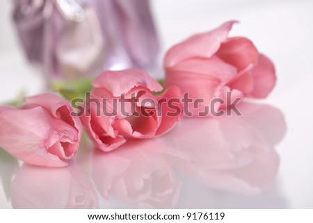 Pink tulips with a soft reflection - stock photo