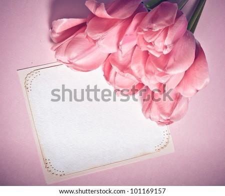 Pink tulips with card closeup - stock photo