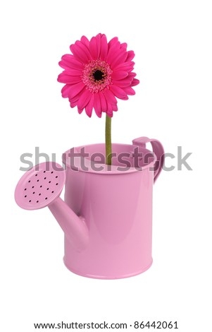 Pink watering can with pink flower - stock photo