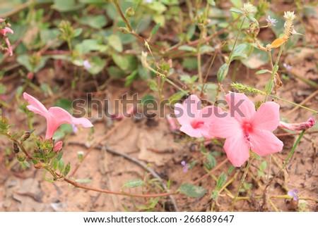 Pink wildflowers - stock photo