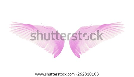 Pink wings isolate white background. - stock photo
