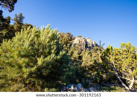 Pinyon-Juniper woodland and Gray Cliffs in Great Basin National Park - stock photo