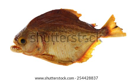 Piranha fish photo, isolated on white. Location: Amazon river, Brazil. - stock photo