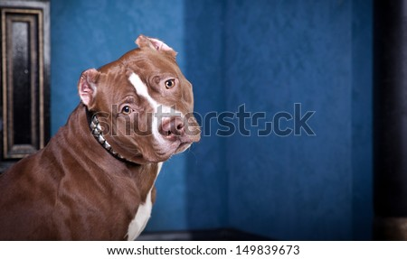 pit bull dog, chain, cave, fire - stock photo