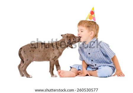 Pit bull puppy kisses the boy in a celebratory cap isolated on white background - stock photo