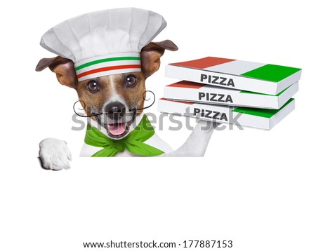 pizza delivery dog with a stack of pizza boxes on a blank placard - stock photo