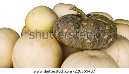 Place the pumpkin on a pile of cantaloupe, which differ in abundance. - stock photo