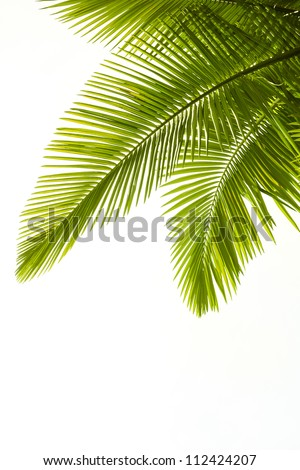 Plam leaves isolated on the white background - stock photo
