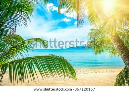 Plam tree on the sunny beach - stock photo