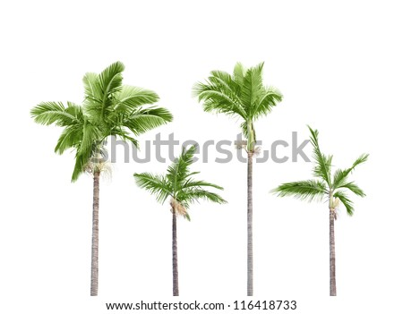 Plam trees isolated on white background - stock photo