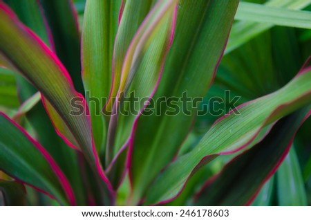 Plant abstract soft focus - stock photo