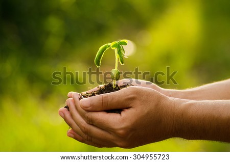 Plant,Agriculture,Seed,Seeding,Tree,Forest, Male hand holding sprout for planting with sunlight over natural forest green background - stock photo