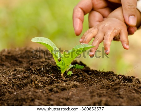 plant,Agriculture, Seeding,Seedling,Baby and Farther hand watering to young plant over sunlight in morning time - stock photo