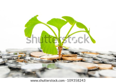 Plant and coin - stock photo