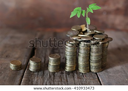 plant and stacks of coins - stock photo